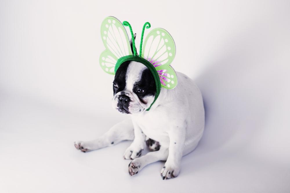 Dog Bites on Halloween