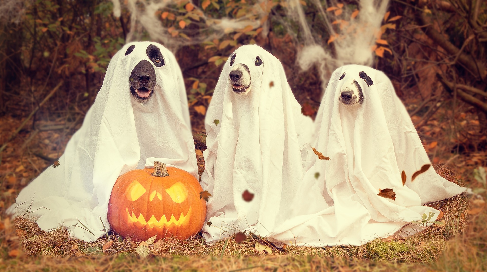 Dogs as Ghosts